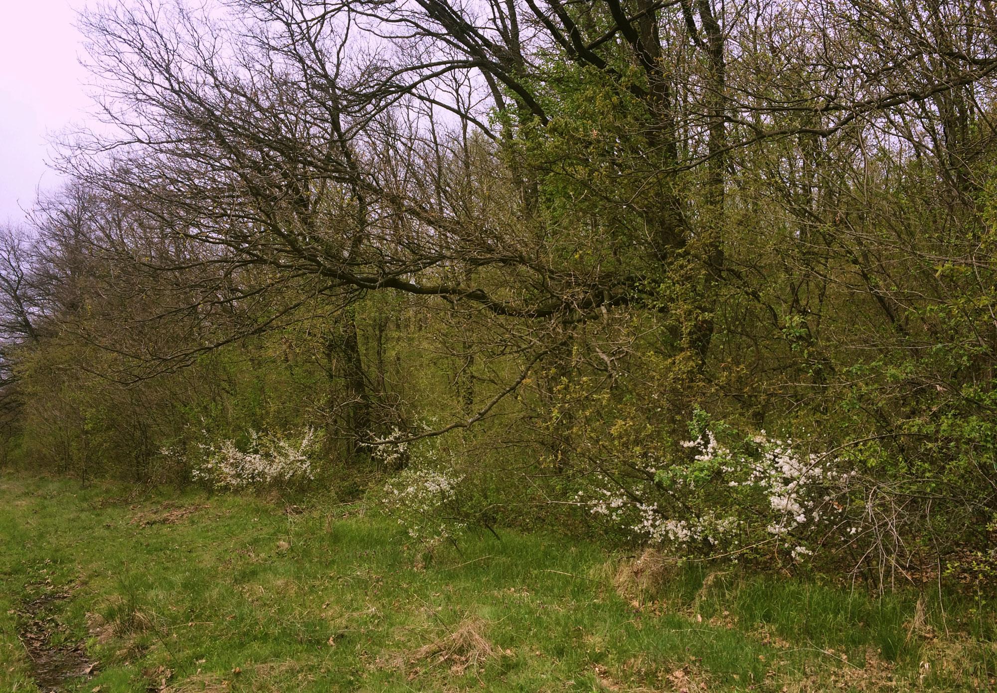 Habitat Vipera berus nikolskii