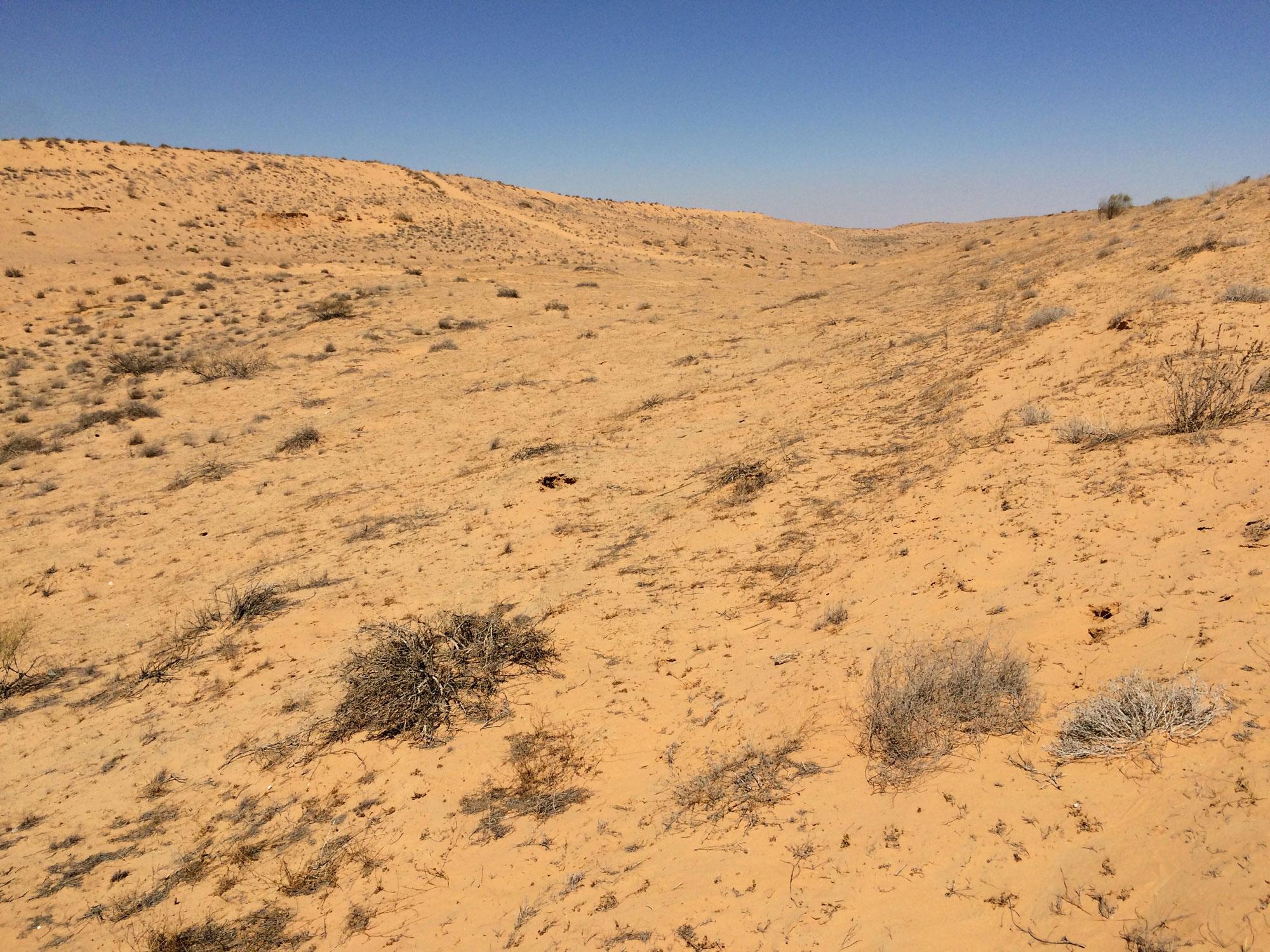 Desertul Negev