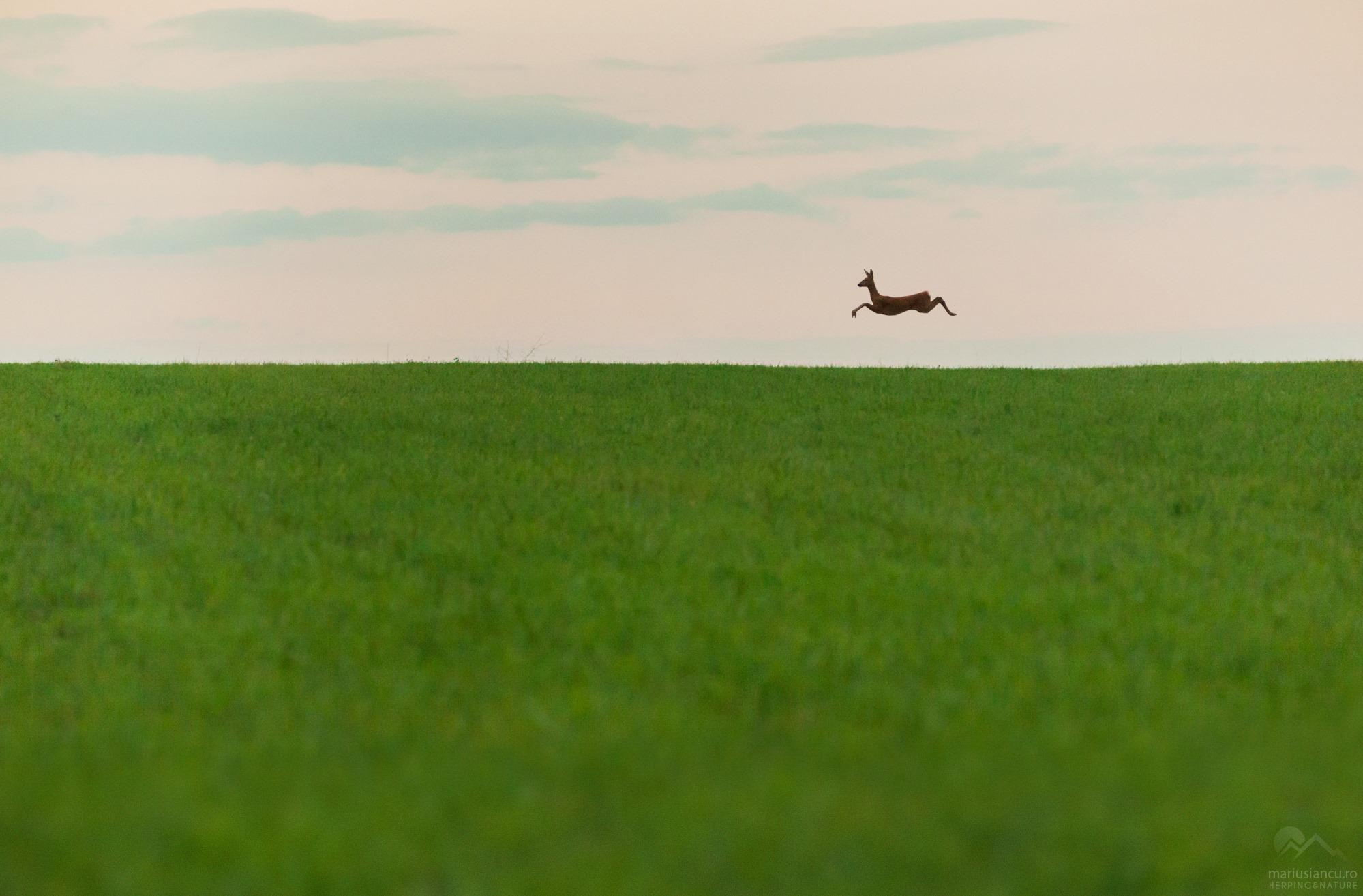 Padurea din poveste - Caprioara zburatoare